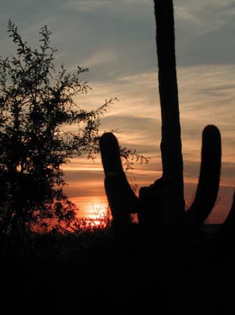 Desert Sand and Cactus in California