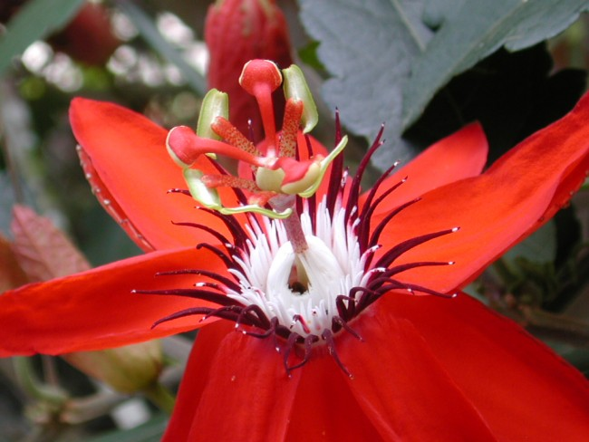 An Exotic flower